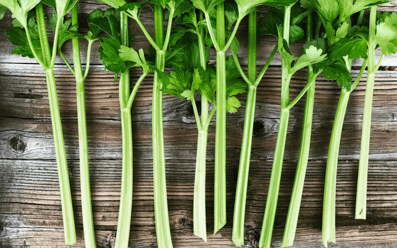 Five Tips For Growing Celery