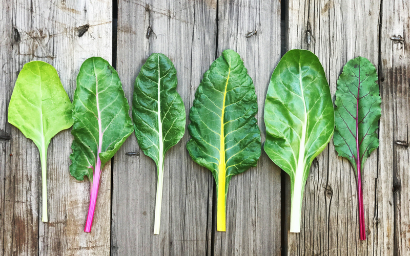 Learn to Grow Swiss Chard