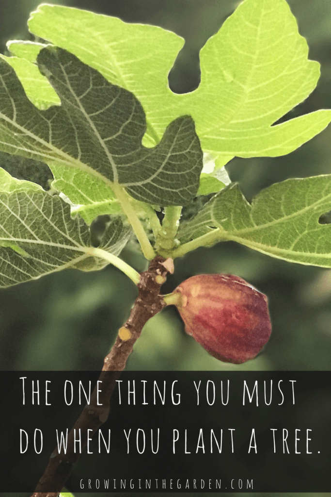 The one thing you must do when you plant a tree