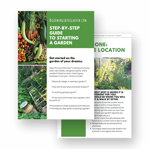 Growing in the garden | Free step by step guide on how to start a garden