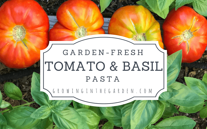 Garden Fresh Tomato and Basil Pasta