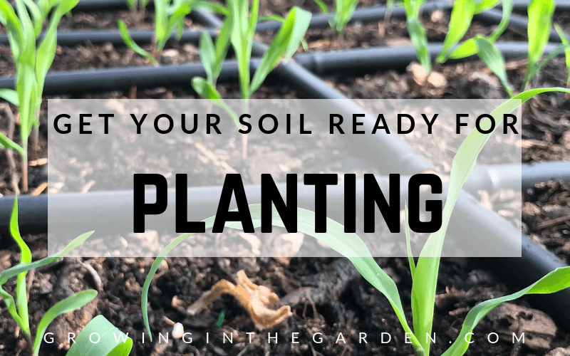 How to prepare your soil for planting #soil#healthysoil #fallplanting #springplanting