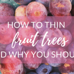How and Why to Thin Fruit Trees