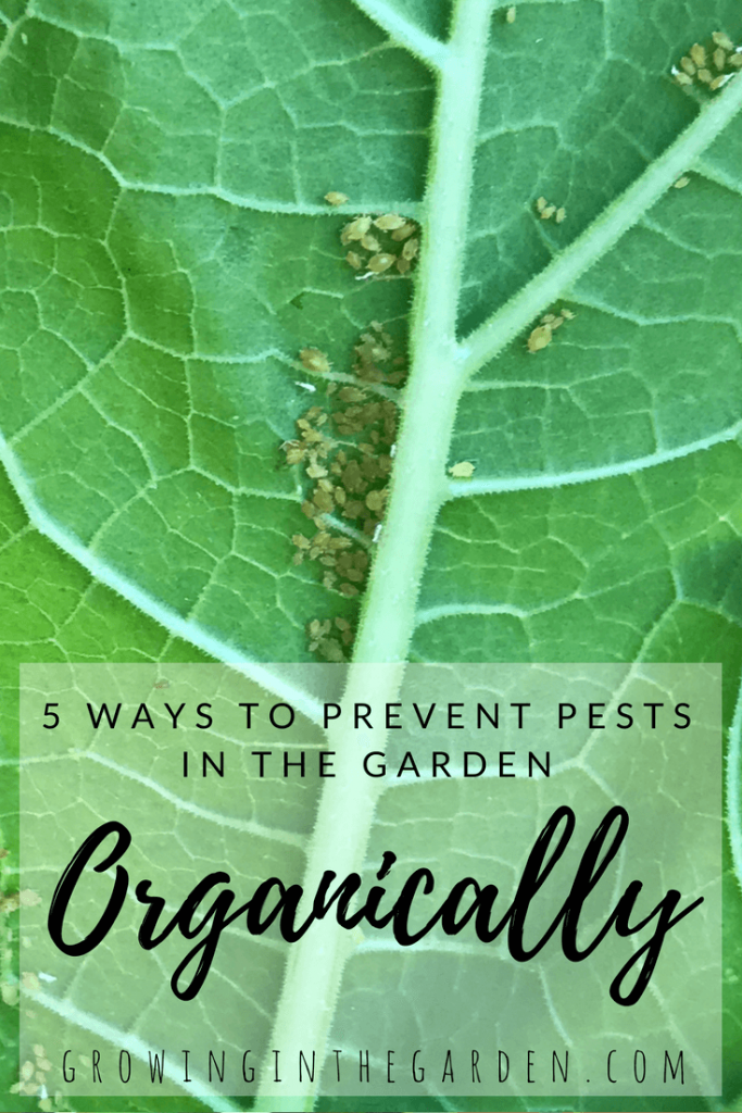 5 Ways to Prevent Pests Organically prevent garden pests organically