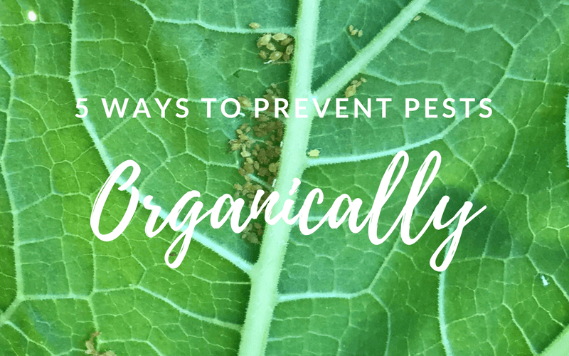 5 Ways to Prevent Pests Organically