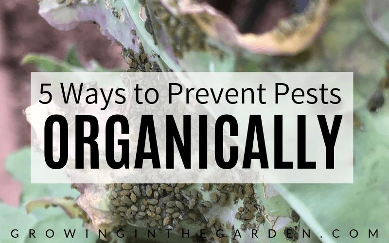 5 Ways to Prevent Pests Organically #organicgarden#gardenorganically#preventpests#gardening#gardenpests#howtogarden#howto#gardening#companionplanting#pestprevention