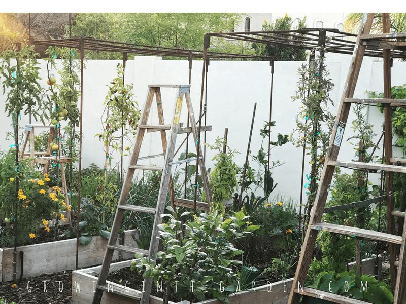 Ladders in the Garden #verticalgardening #verticalgarden #rustic #antique #repurpose #reuse #gardening #ladder
