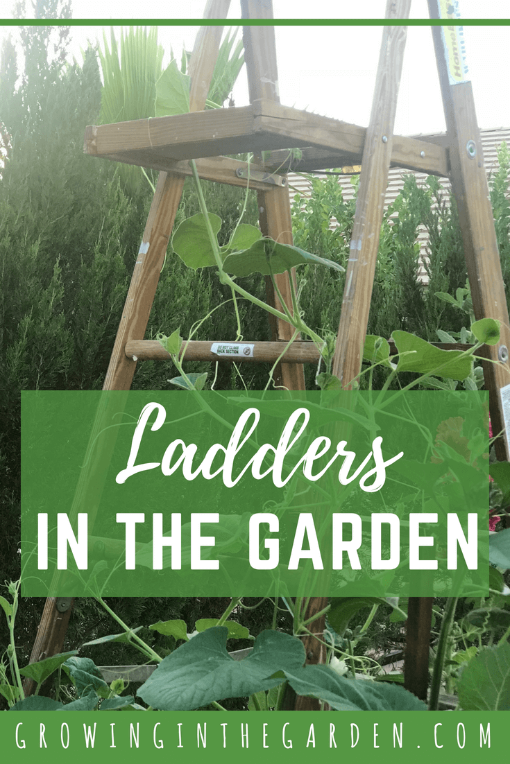 Ladders in the Garden #verticalgardening #verticalgarden #rustic #antique #repurpose #reuse #gardening #ladder