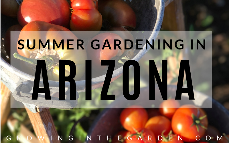 Ultimate guide to summer gardening in Arizona