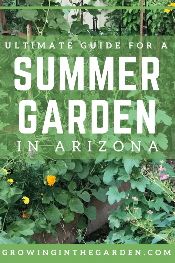 Summer Gardening in Arizona,Ultimate Guide for a Summer Garden in Arizona #summergarden #arizona #gardening #desertgardening