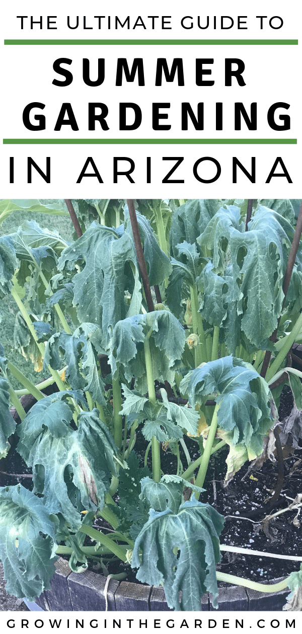 Ultimate guide to summer gardening in Arizona