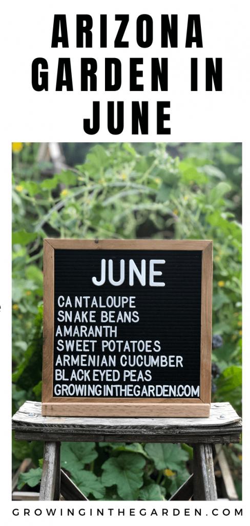Arizona Garden in June