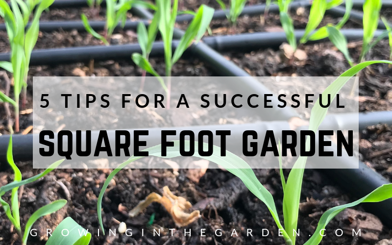 5 Tips for a Successful Square Foot Garden #gardening #squarefootgarden #gardentips