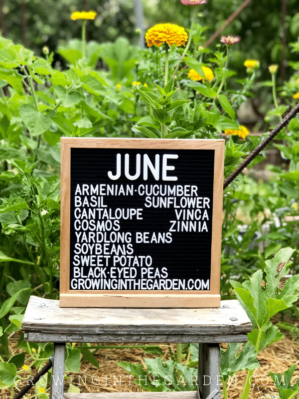 Planting guide for Arizona Garden in June