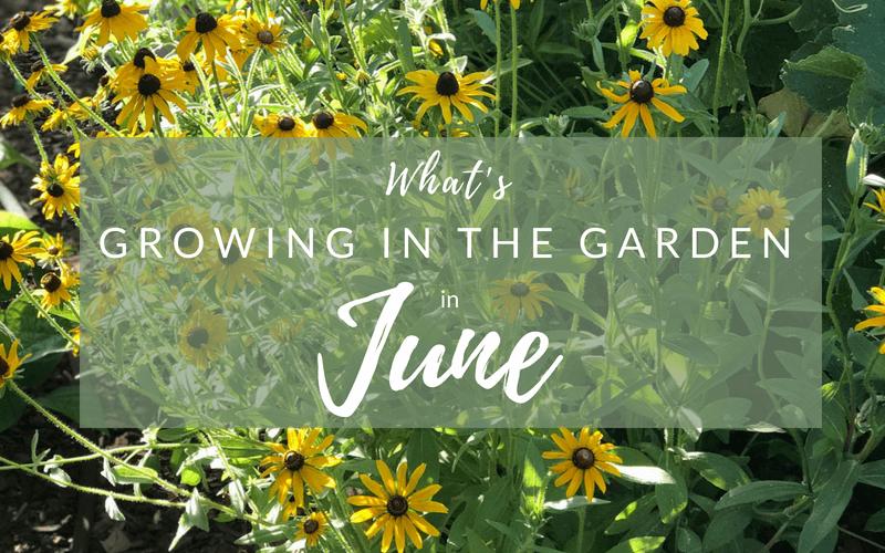 What Grows in Arizona Gardens in June #arizonagarden #arizona #garden #june #garden