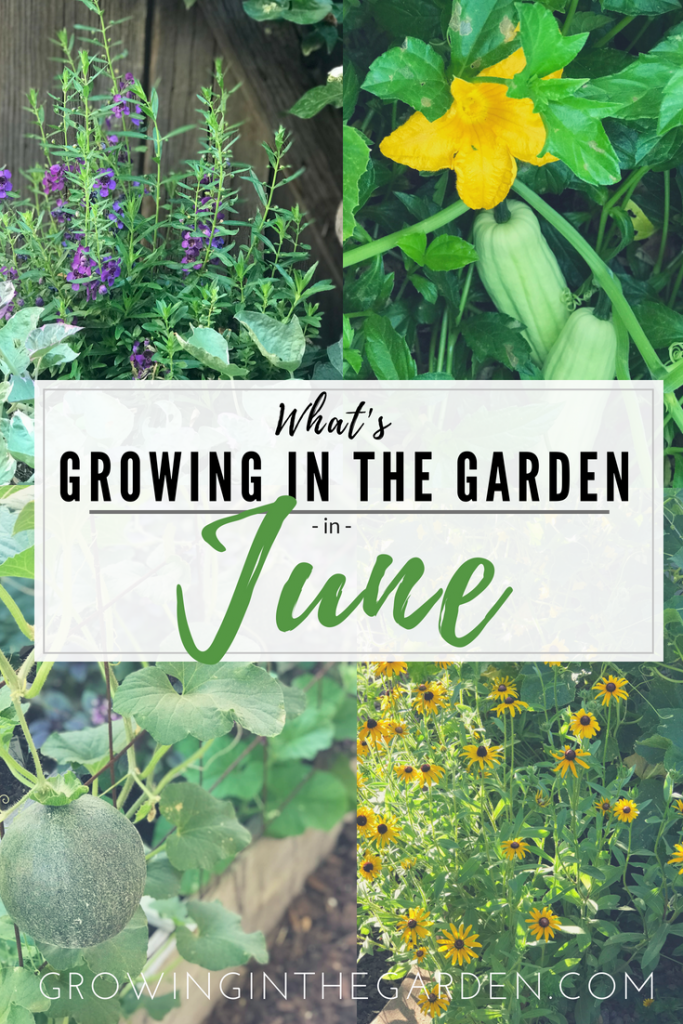 What Grows in Arizona Gardens in June #arizonagarden #arizona #garden #june #garden