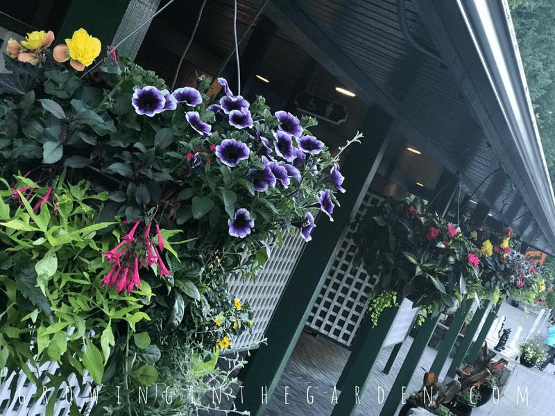 What's Growing in the Butchart Gardens #butchartgarden #garden #gardentour #flowergarden