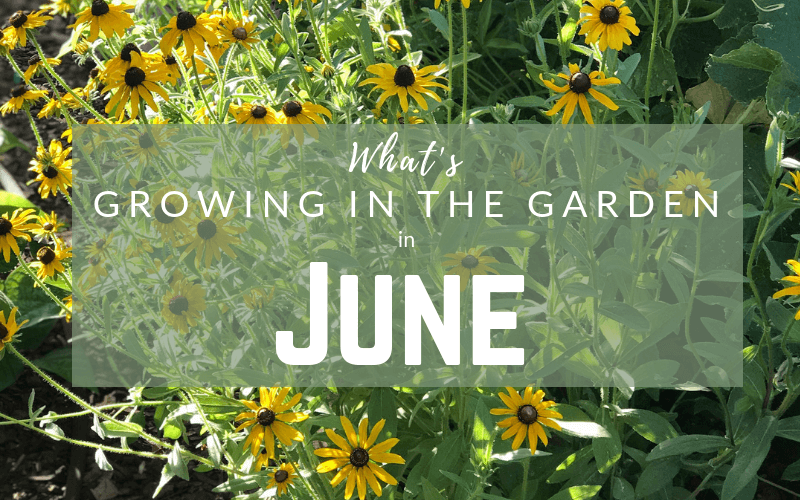 What to Grow and Plant Arizona Garden June #arizonagarden #arizona #garden #june #garden