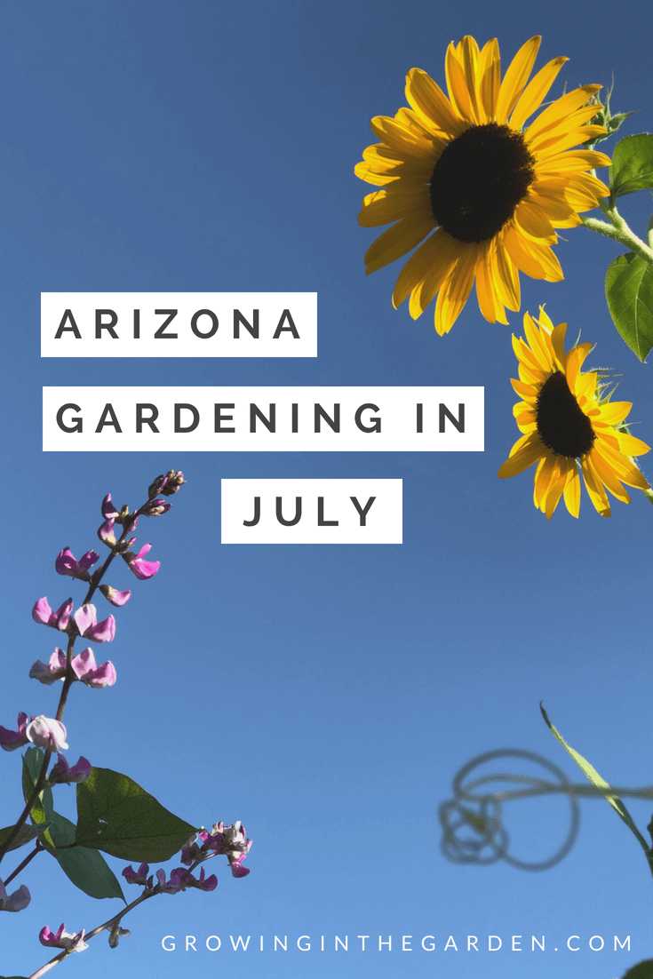 Arizona Gardening in July #gardening #desertgardening #howtogarden