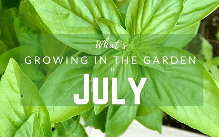 Arizona Gardening in July #gardening #desertgardening #howtogarden