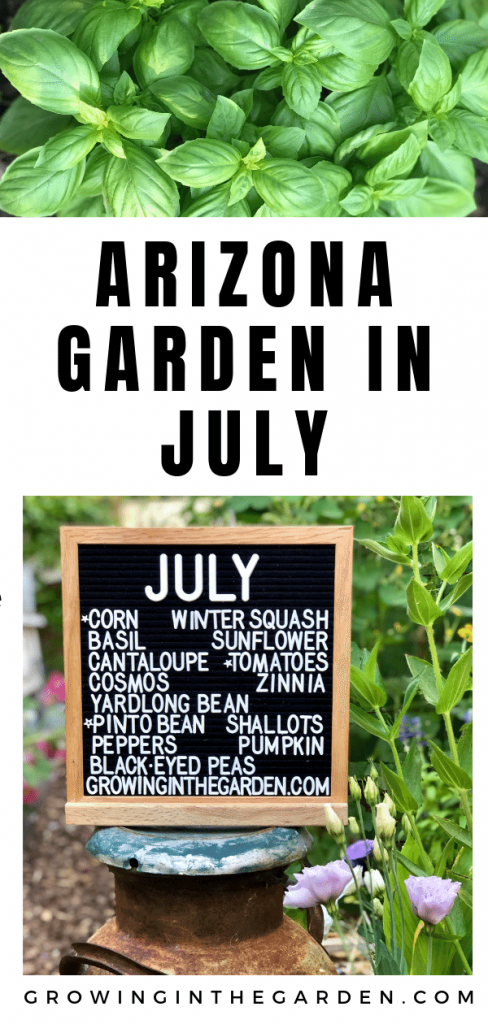 Arizona garden in July #arizonagardening