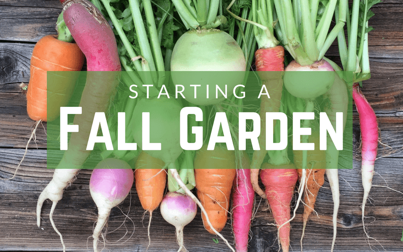 5 Tips for Starting a Fall Garden - How to start a fall garden - What to plant in a fall garden #fallgarden #gardening