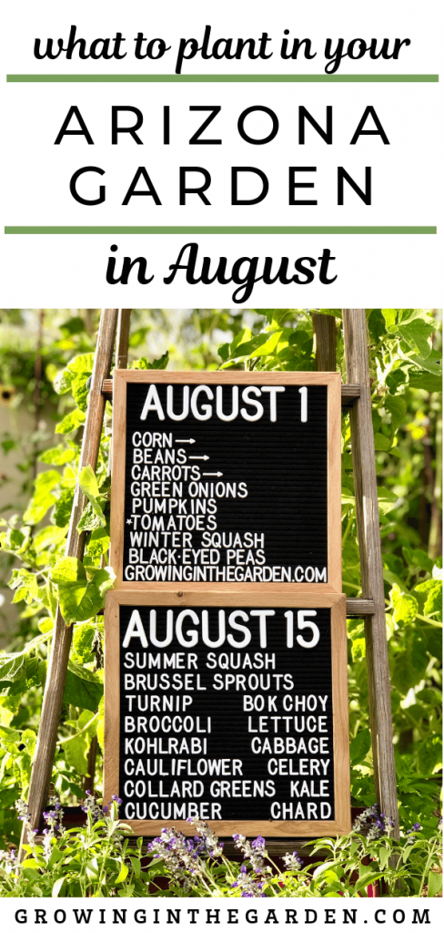 Arizona garden in August #arizonagarden #arizonagardenguide