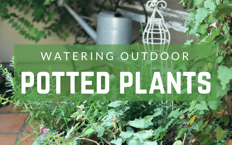 The best way to water outdoor potted plants #containergardening #watering #containergarden