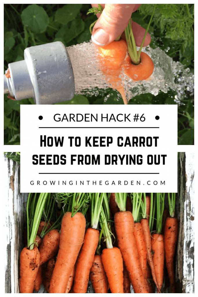 Gardening Hacks: 9 Simple Tips for the Garden #gardenhack #gardentips #howtogarden How to keep carrot seeds from drying out