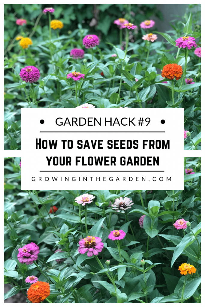 Gardening Hacks: 9 Simple Tips for the Garden #gardenhack #gardentips #howtogarden How to save seeds from your flower garden