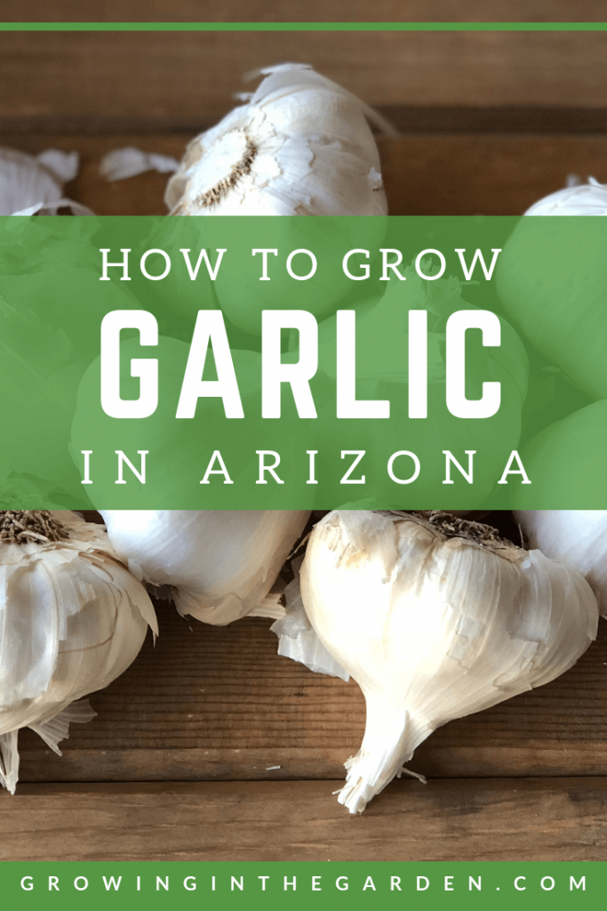 What foods are grown in arizona