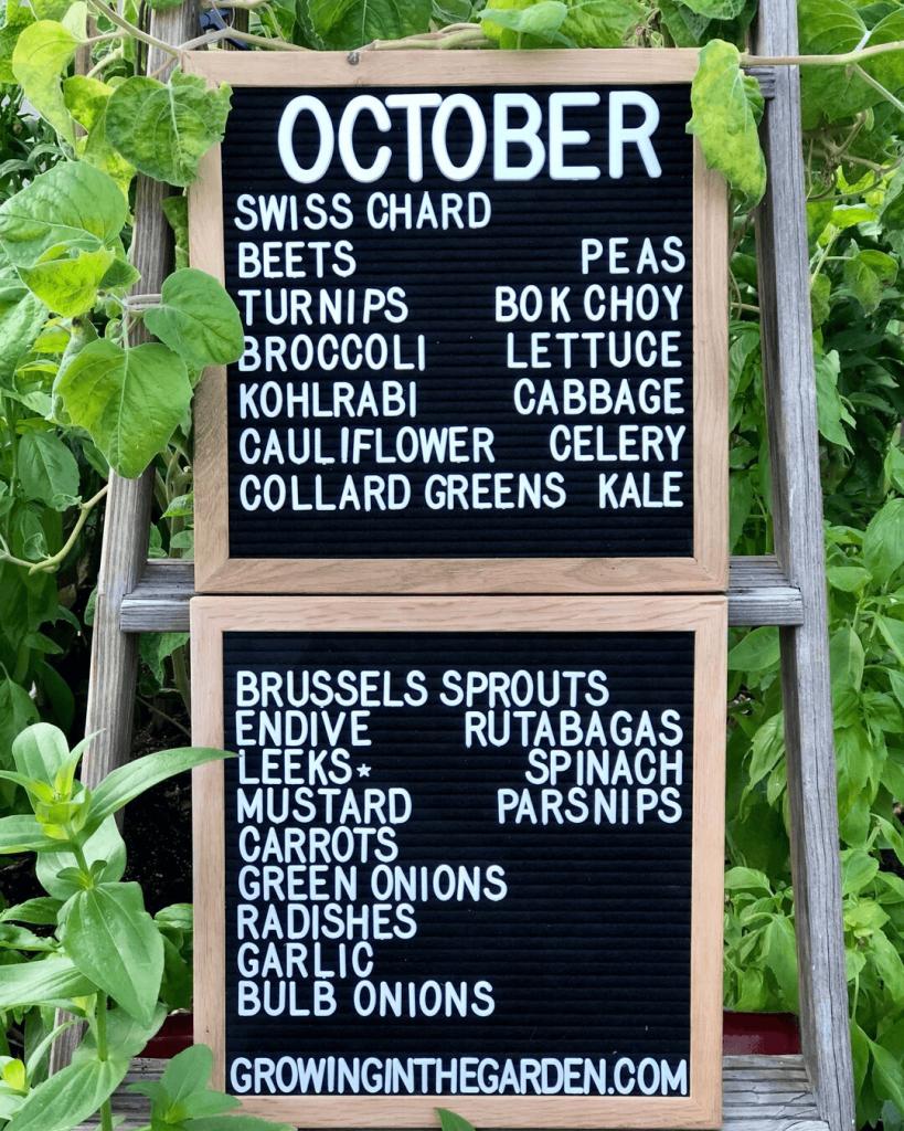 Arizona Garden in October