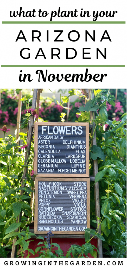What to plant in the Arizona Garden in November