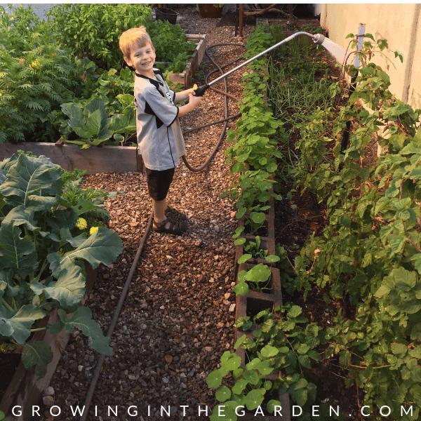 Arizona Garden in December#gardening #garden #arizonagarden #decembergarden #gardeninginarizona #desertgarden