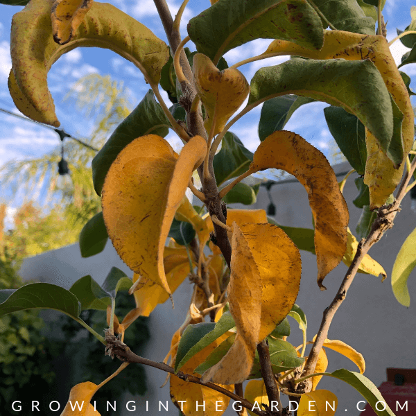 Arizona Garden in December#gardening #garden #arizonagarden #decembergarden #gardeninginarizona #desertgarden