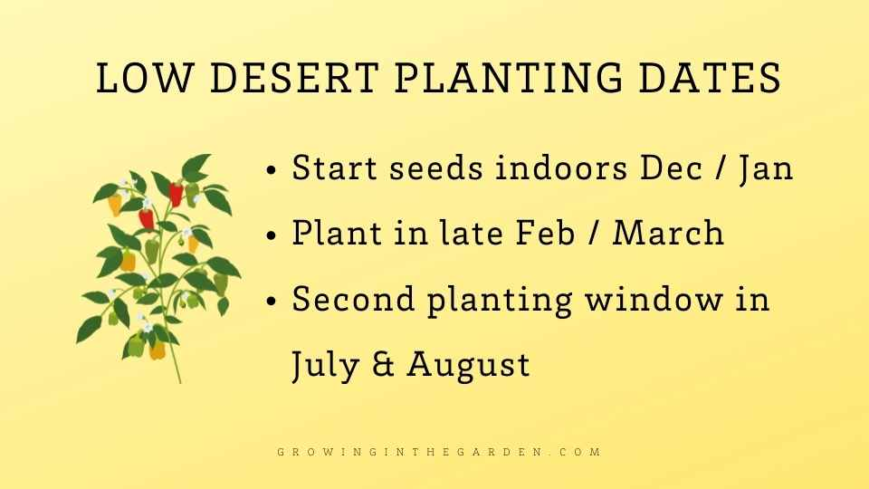 When to plant peppers in the low desert of arizona