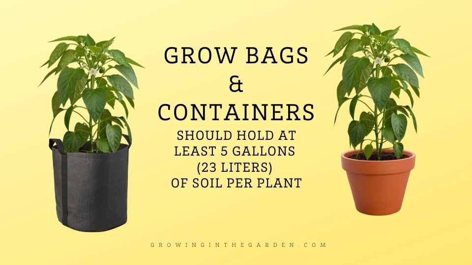 What size grow bag and containers do peppers grow best in