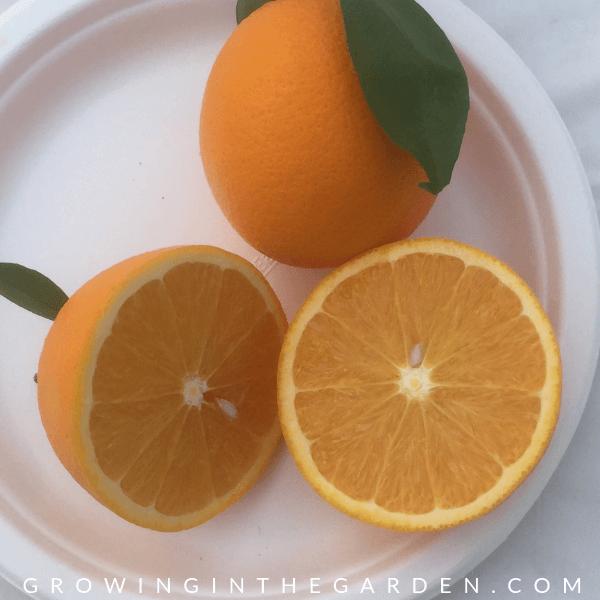 Lane Late Navel Orange