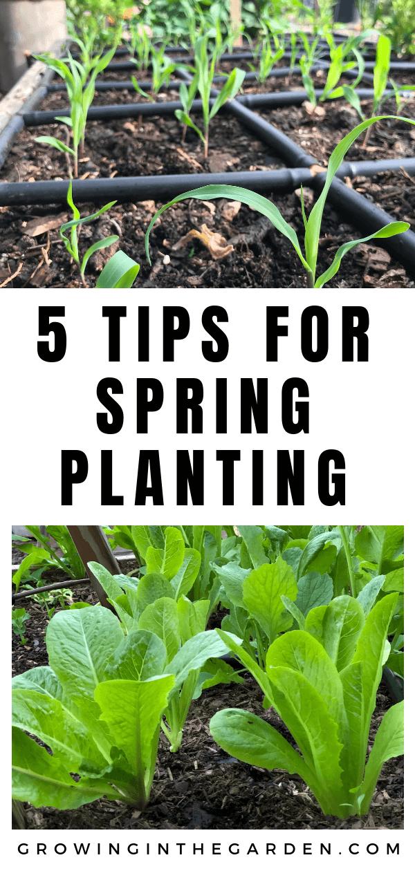 Spring Garden Checklist - 5 Tips for Spring Planting - Tidy up your garden - get ready for spring planting #garden #springgarden #tidyup