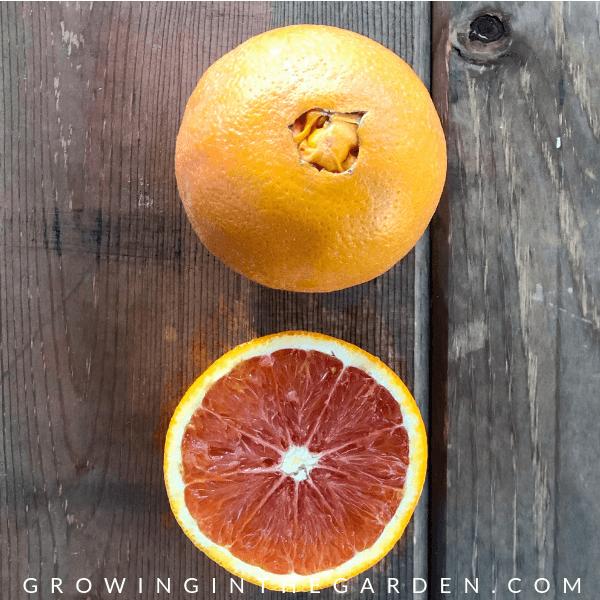 TYPES OF CITRUS TREES – VARIETIES OF CITRUS - Which type of citrus to plant #citrus #citrustrees #choosingcitrus