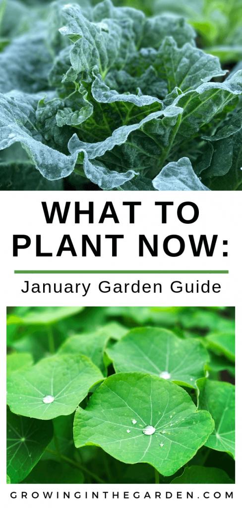 https://growinginthegarden.com/arizona-garden-in-january/