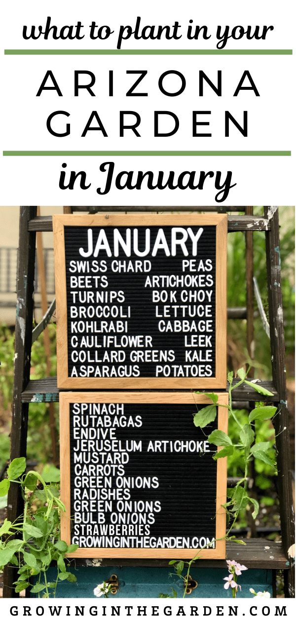 What to plant in your Arizona Garden in January