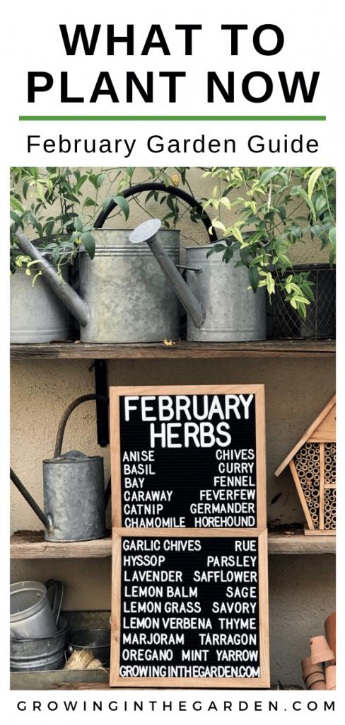 Arizona Garden in February