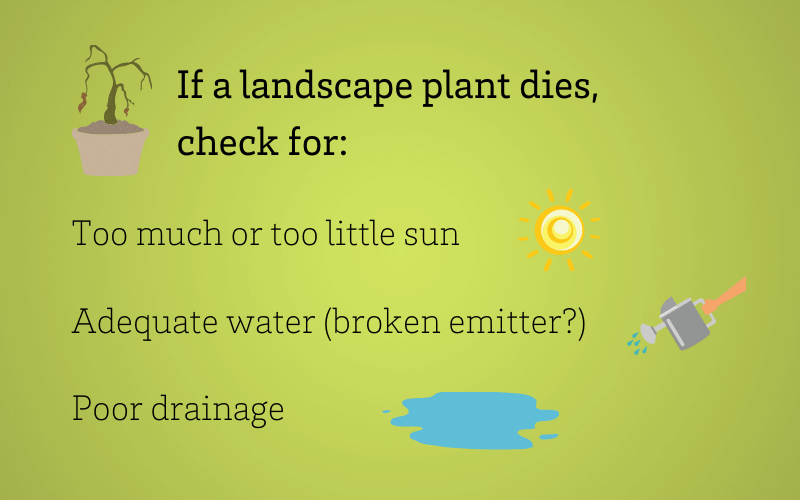 Why did my plant die?