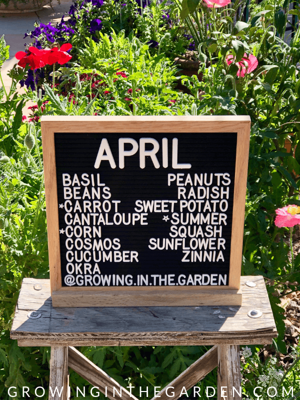 Arizona Garden in April #arizonagardening #arizonagarden #aprilinthegarden