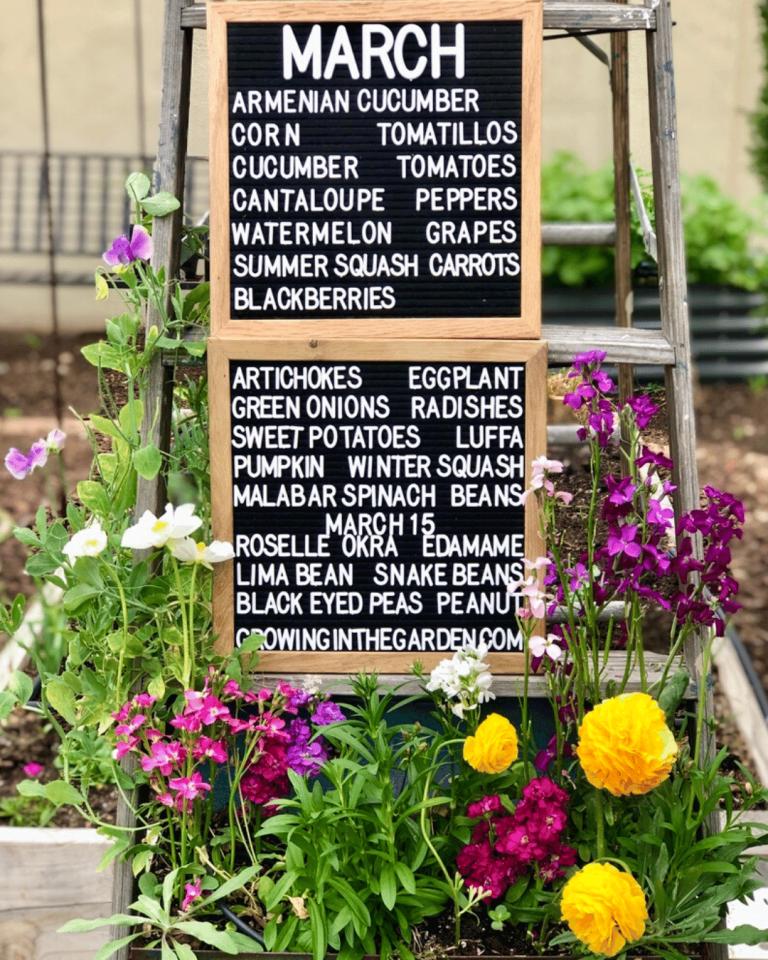 Arizona Garden in March