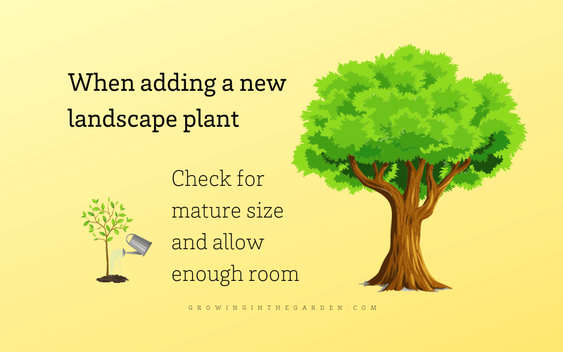 Mature size of plants infographic