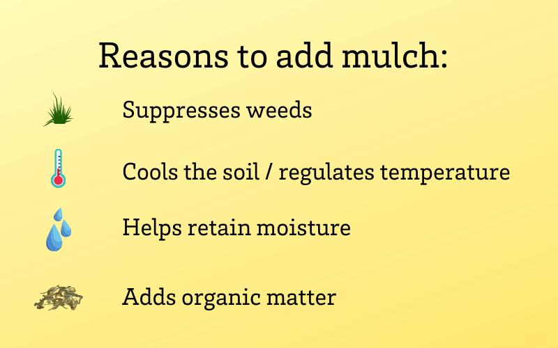 Reasons to add mulch