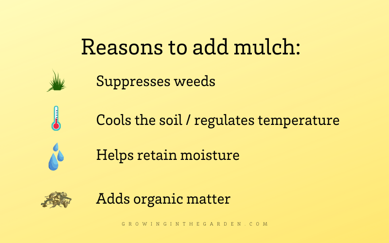 Reasons to add mulch infographic