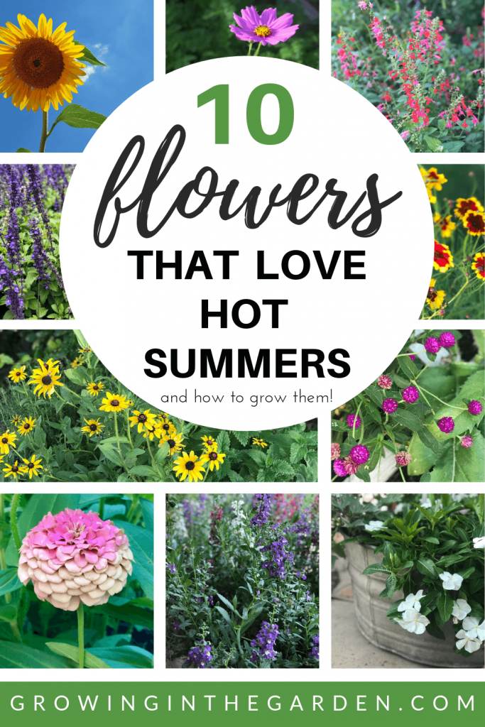 10 Flowers That Love Hot Summers And How To Grow Them Growing In
